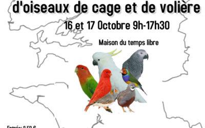 Championnat du Finistère d'oiseaux de cage et de volières